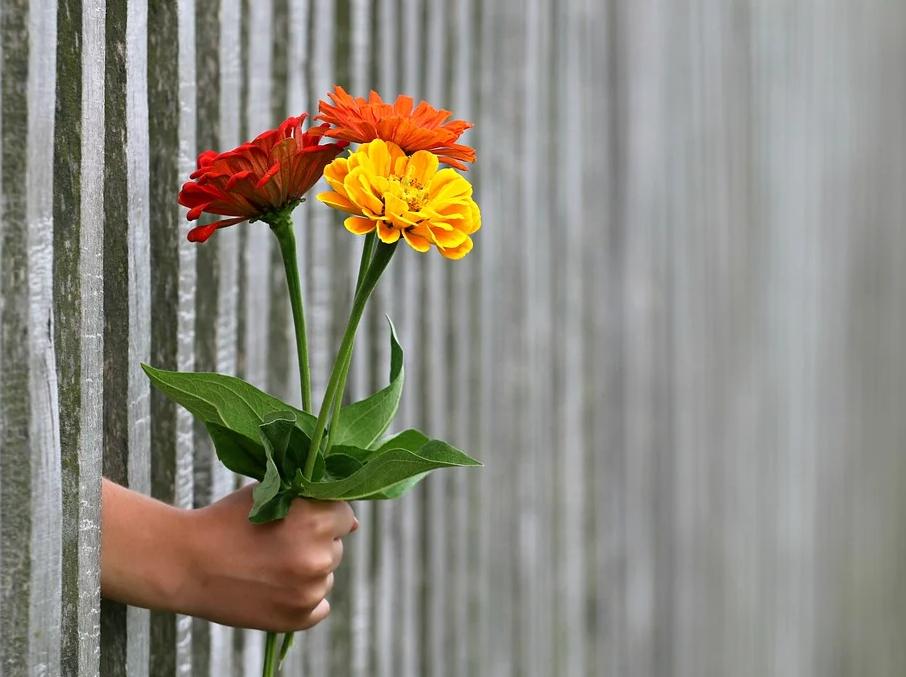 ruka s květinou za plotem